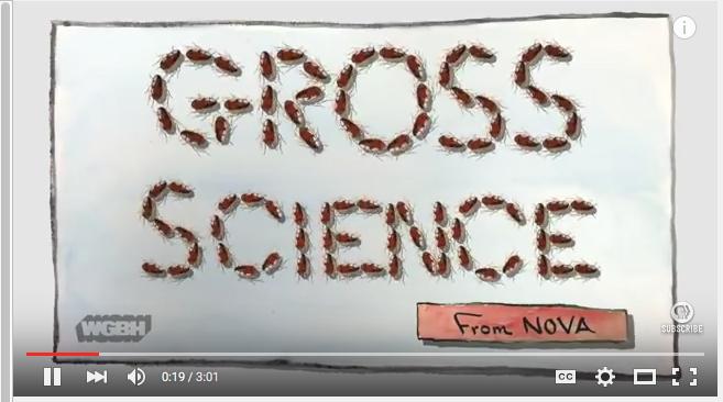 gross science